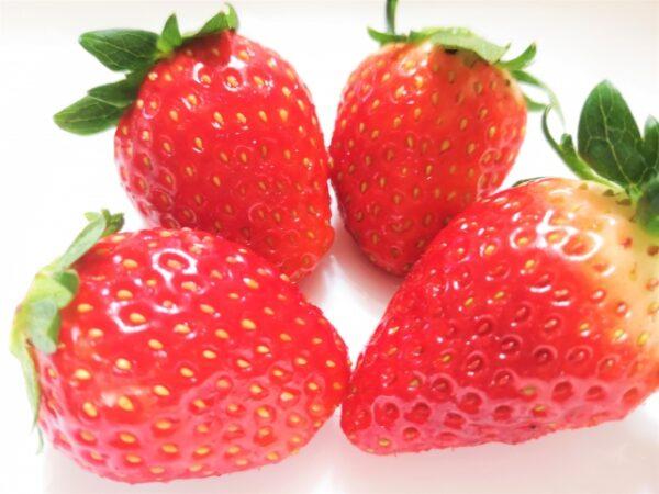 ハムスターの果物いちご